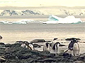 Dave Ford takes a polar plunge in the freezing waters of Antarctica