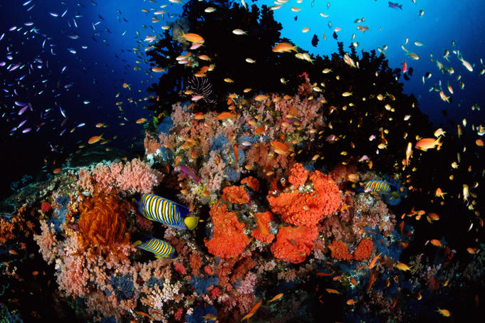Tropical fish and coral, Daisy's Drop-off.