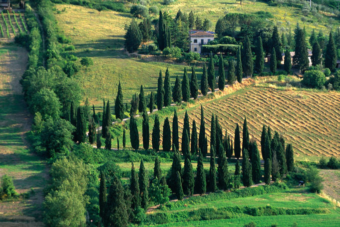 Winding road lined with cypress trees.