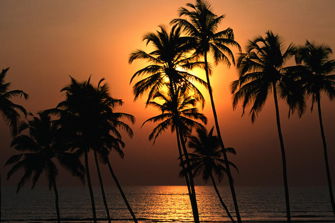 Sunset through the coconut palms on Mandrem back beach.