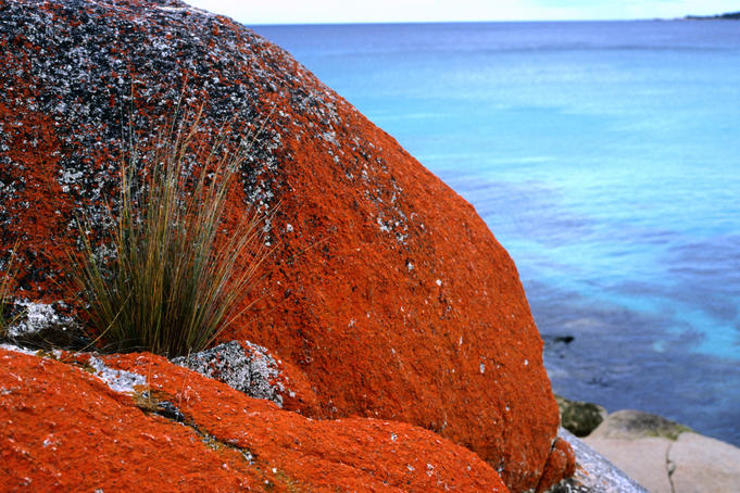 Bay of Fires coastal reserve.