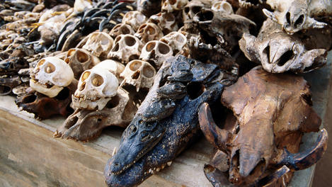 Bones, Akodessewa Fetish Market, Togo