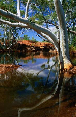 Billabong in outback Western Australia.