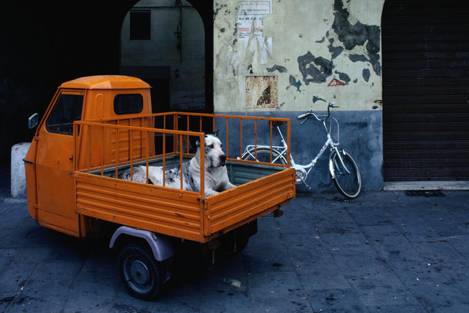 Huge great dane dog in the back of tiny orange 3-wheeled truck in Lucca.