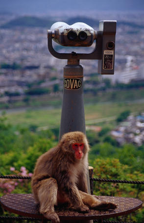Monkey from the Iwatayama Monkey Park sitting beneath a viewing telescope in Kyoto.