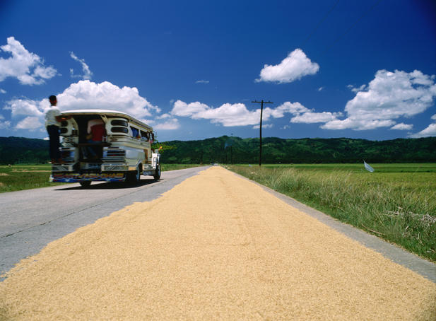 Rice drying on the road.