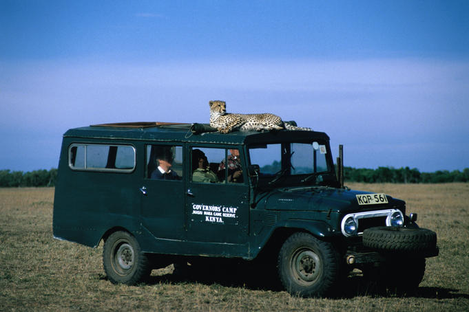Safari jeep with a cheetah (Acinonyx jubatus) on the roof.