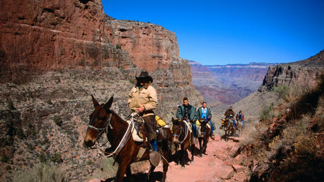 Mule tour, Grand Canyon National Park