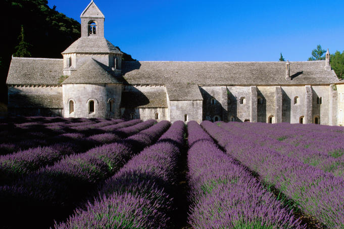 Lavender field at Abbey of Senanque.