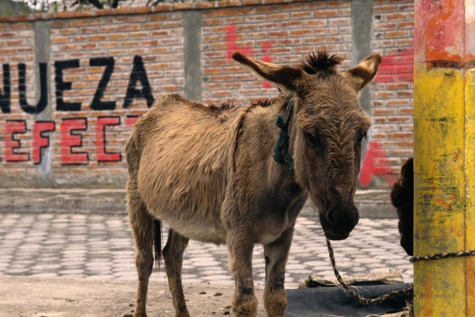 A donkey waiting by the roadside in Guano.