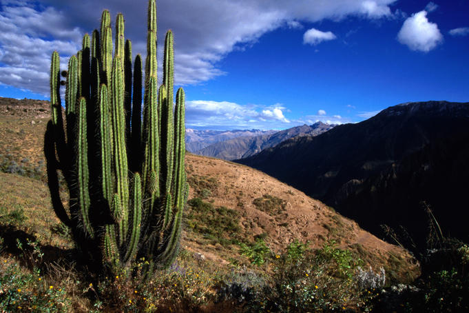 Cactus on slopes near Cabanaconde, the start of the Colca Canyon trek.