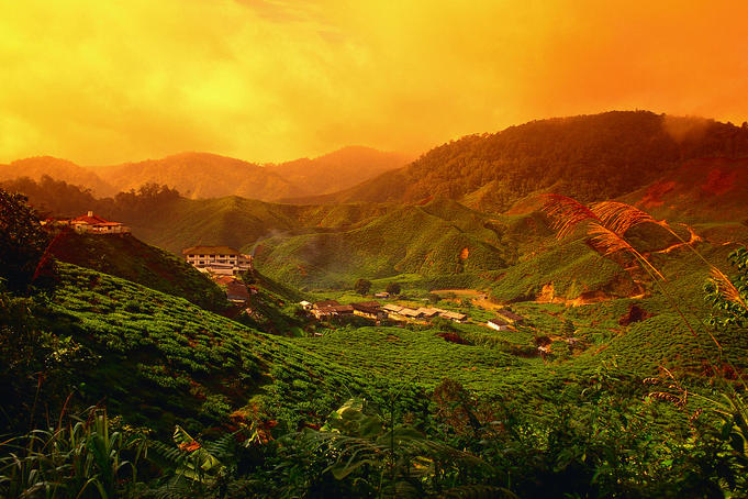 View over the Bharat Tea Estate, near Tanah Rata - Cameron Highlands, Pahang State