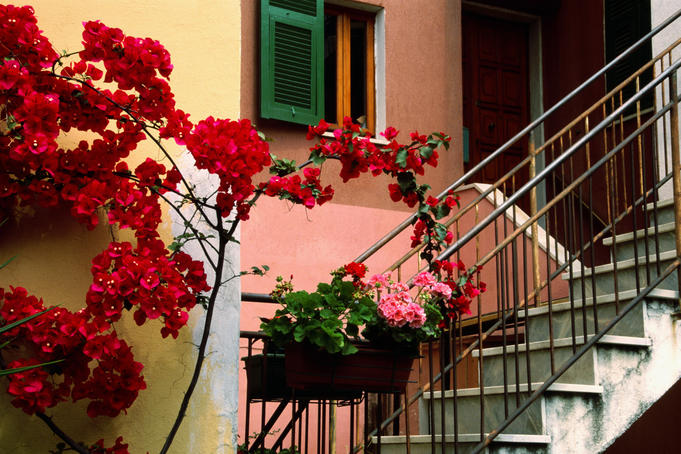 Flowers and painted houses in town in Cinque Terre.