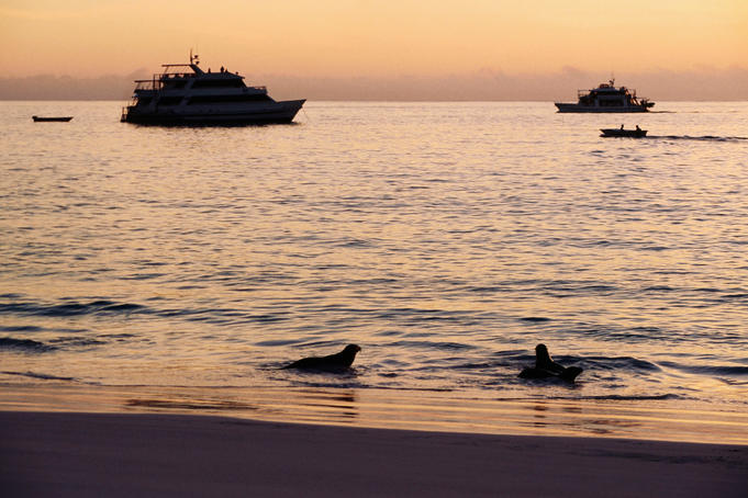 Cruise boats and Galapagos sea lions (Zalopus californianus), sunset.