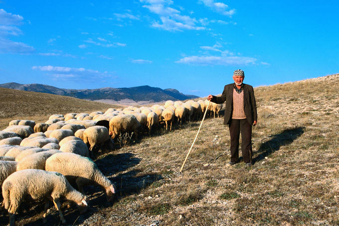 Shepherd and his flock on the hills near Afyon in the North Aegean Region