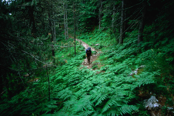 Trekker descending trail on Mt Olympus from Ghiosos Apostolidhis refuge through forest near Petrostrouga.
