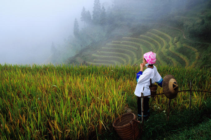 Zhuang minority girl in terraced rice fields.