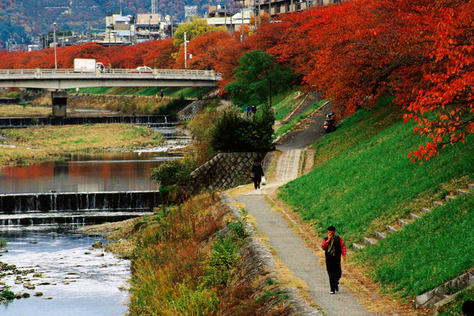 People walking past trees in autumn colours along the Takano river.
