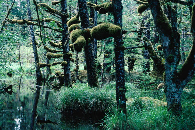 Temperate rainforest, Naikoon Provincial Park, Haida Gwaii.