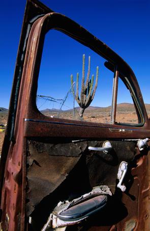Cactus seen through window of wrecked car, Transpeninsular Highway (Hwy 1).