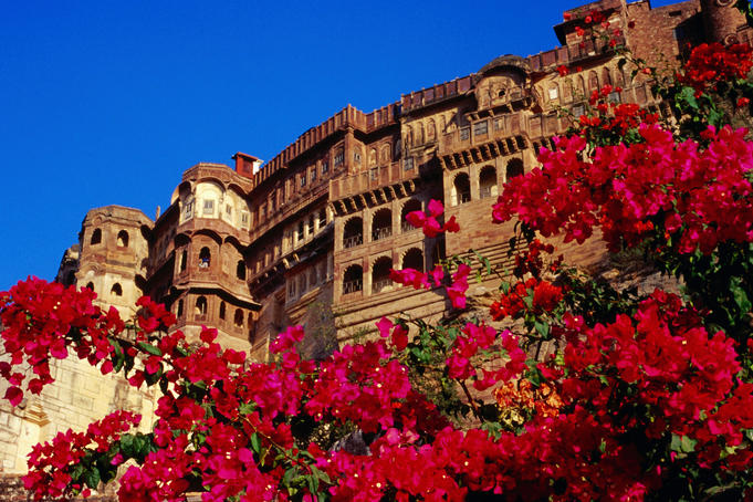 Meherangarh fort with pink flowers in foreground.