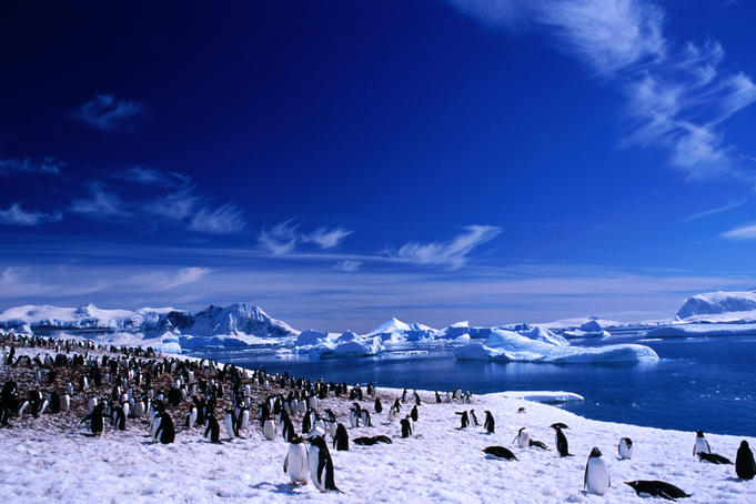 Large Gentoo Penguin (Pygoscelis papua)rookeries - the biggest in the Antarctica Peninsula. Named after JMA Cavalier de Cuverville, a French vice admiral.