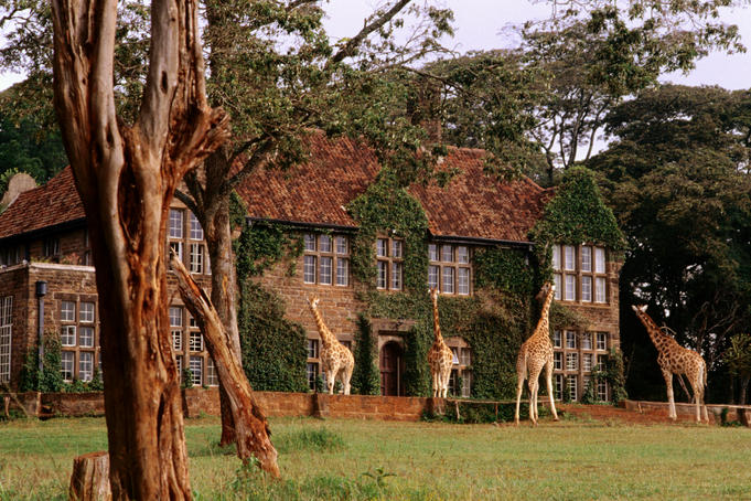 Rothschild's giraffes outside Giraffe Manor Lodge.