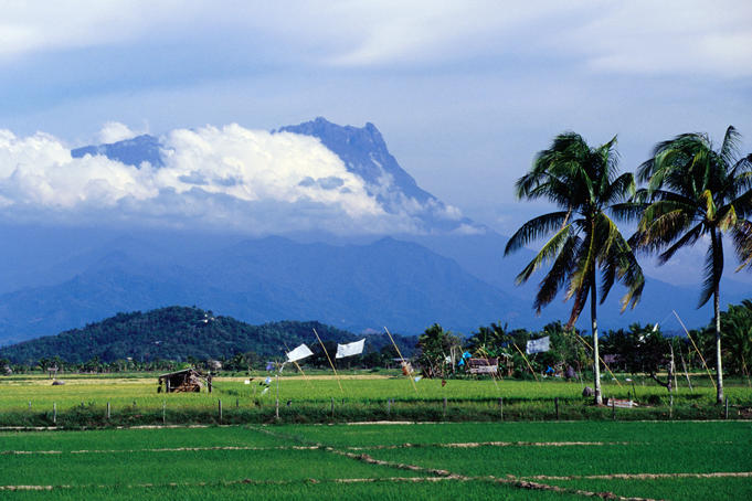 View of Mt Kinabalu, Southeast Asia's highest mountain, across rice paddies.