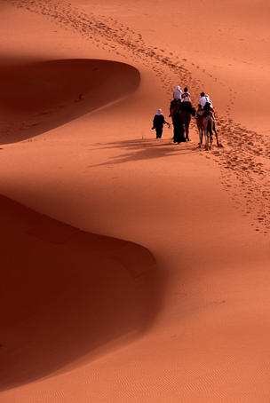 Camel riding tourists taking early morning ride among Saharan dunes.