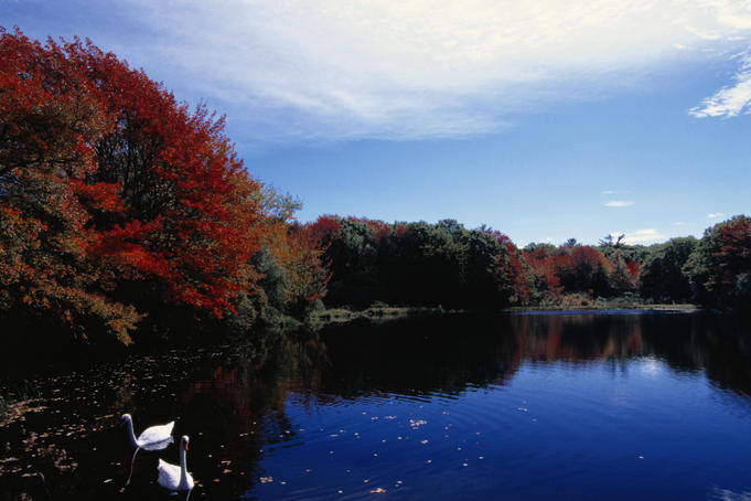 Autumn scene: ducks on a pond - Cape Cod, Maine