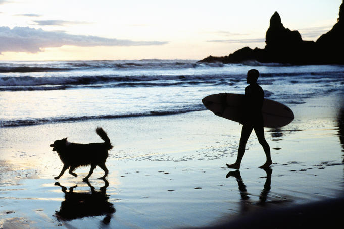 Surfer with his dog on Piha Beach.