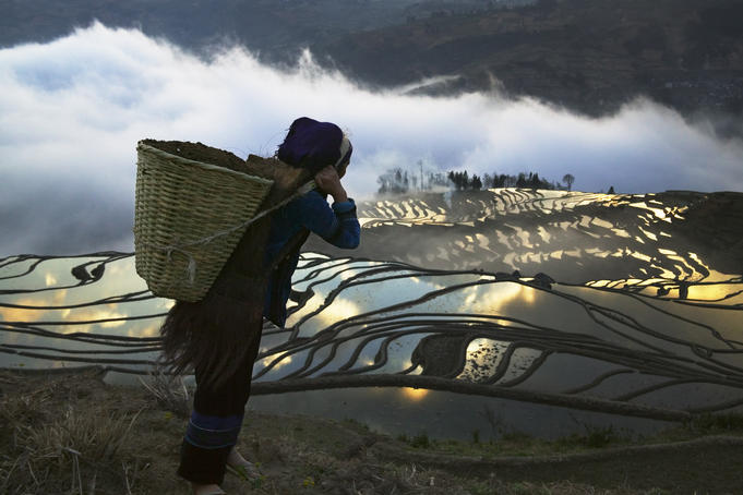 Hani woman carrying basket looking over water filled rice terraces at sunrise.