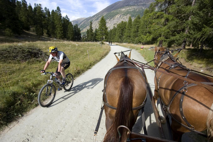 Cyclist crossing path of horse-drawn carriage near Pontresina.