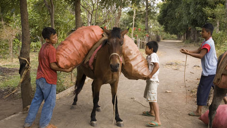 Bananas from horse, Isla de Ometepe
