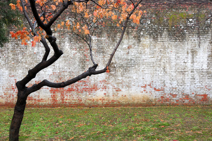 Tree and wall at Seodaemun Prison, north of river.