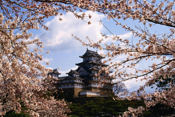 Himeji-jo Castle and cherry blossom.
