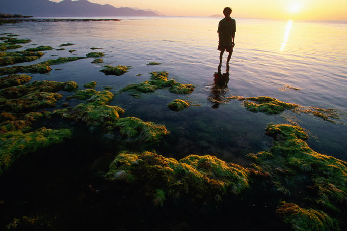 Harvesting seaweed beds of Vietnam's south central coast.