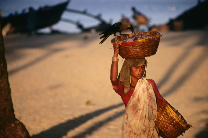 Another Colva beach labourer hauls basket of fresh marine produce
