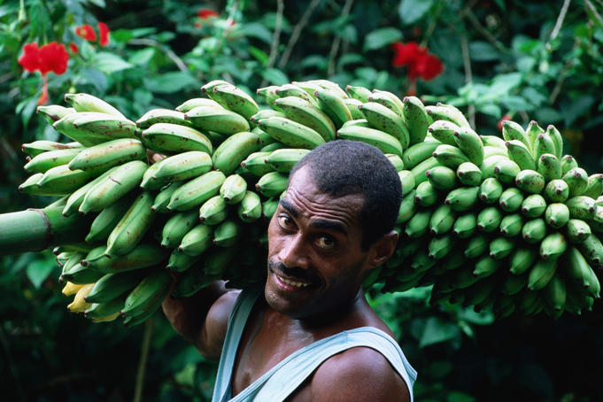 Man carrying a bunch of bananas.