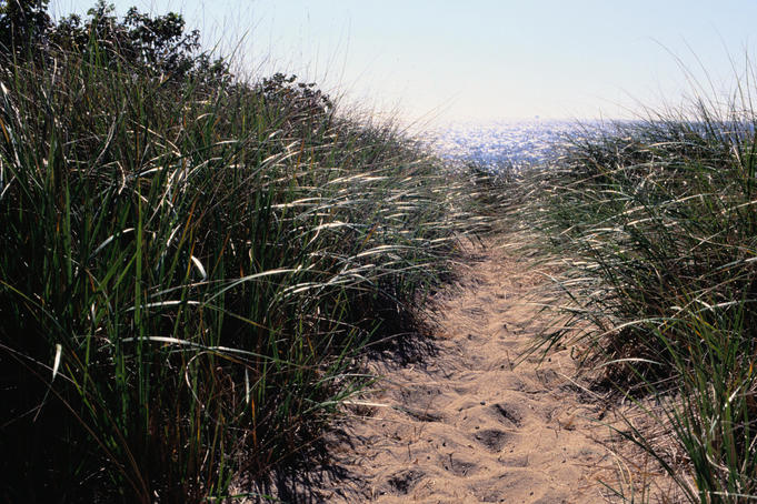 Cape Cod National Seashore: Path over the dunes leads to the beach - Cape Cod, Massachusetts