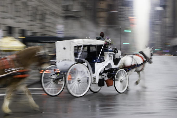 Horse drawn carriage on rainy winter day in Midtown.