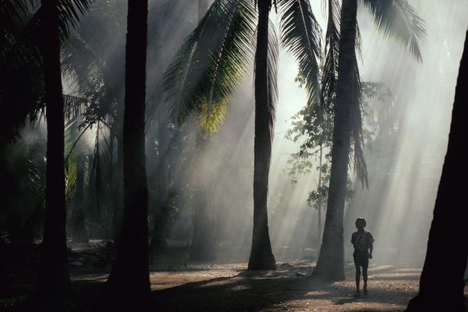 Boy in misty coconut palm (Cocos nucifera) grove at Riung.