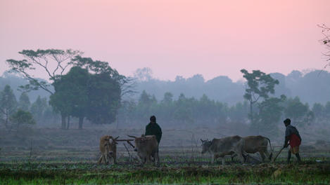 Farmers cultivating land, Orissa