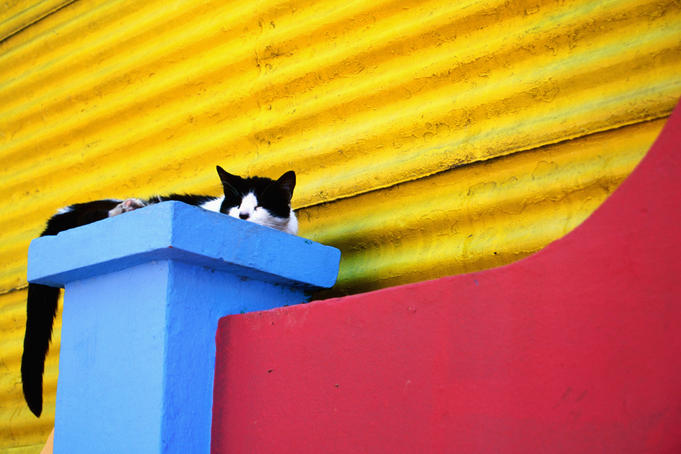 Cat sleeping in barrio La Boca.