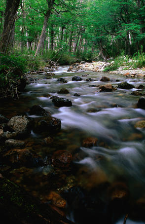 Arroyo Goye flowing through lenga beech forest.