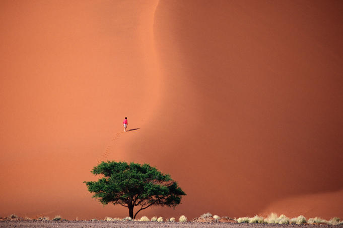Hiker climbing giant sand dune above a thorn tree, between Sesriem and Sossusvlei.