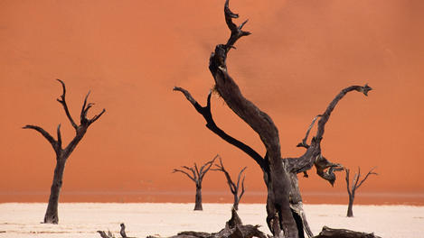 Tree skeletons, Dead Vlei, Africa