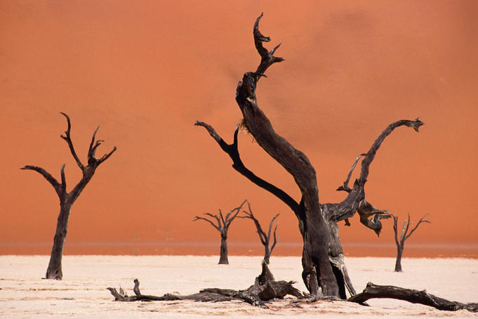 Tree skeletons on an alkali pan and giant sand dune, Dead Vlei.