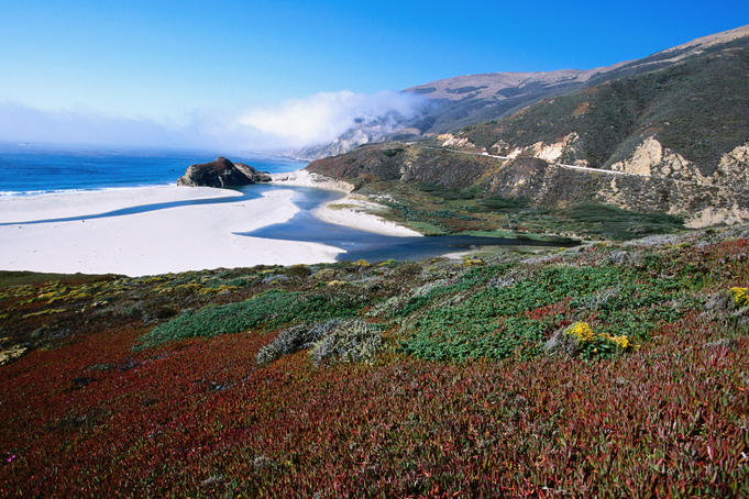 Iceplants and Big Sur coastline.