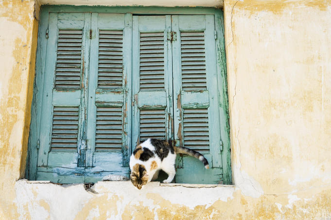 Cat outside shuttered window, Old Plaka District.